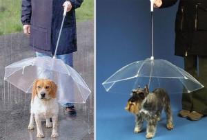 parapluie-pour-chiens-original