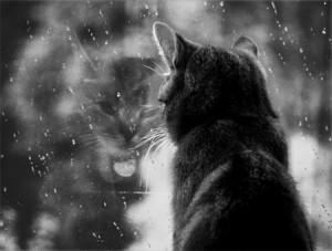 rainymood.2