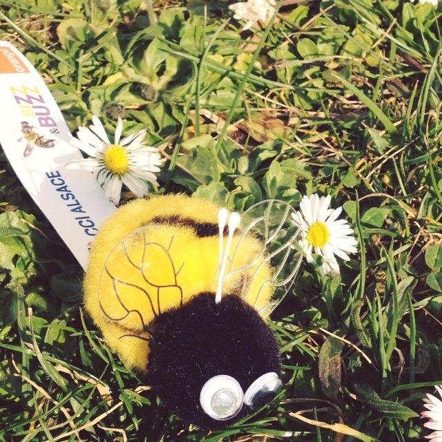 Les winnies abeille ont fait buzzer l'événement Bizz &