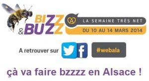 winnie-abeille-bizz&buzz-2014 (6)